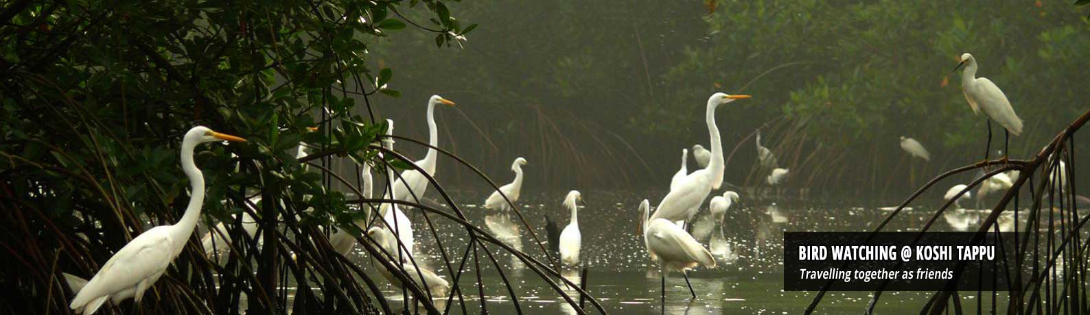 Bird Watching - Koshi Tappu